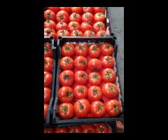 Томат, помидоры